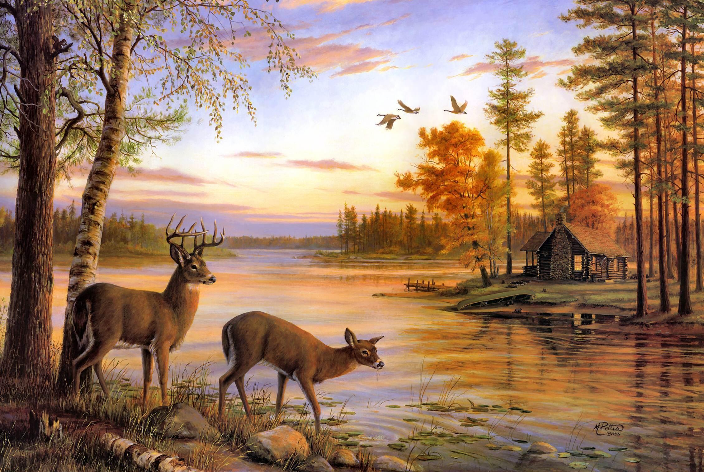 deer wallpaper for my desktop - photo #21
