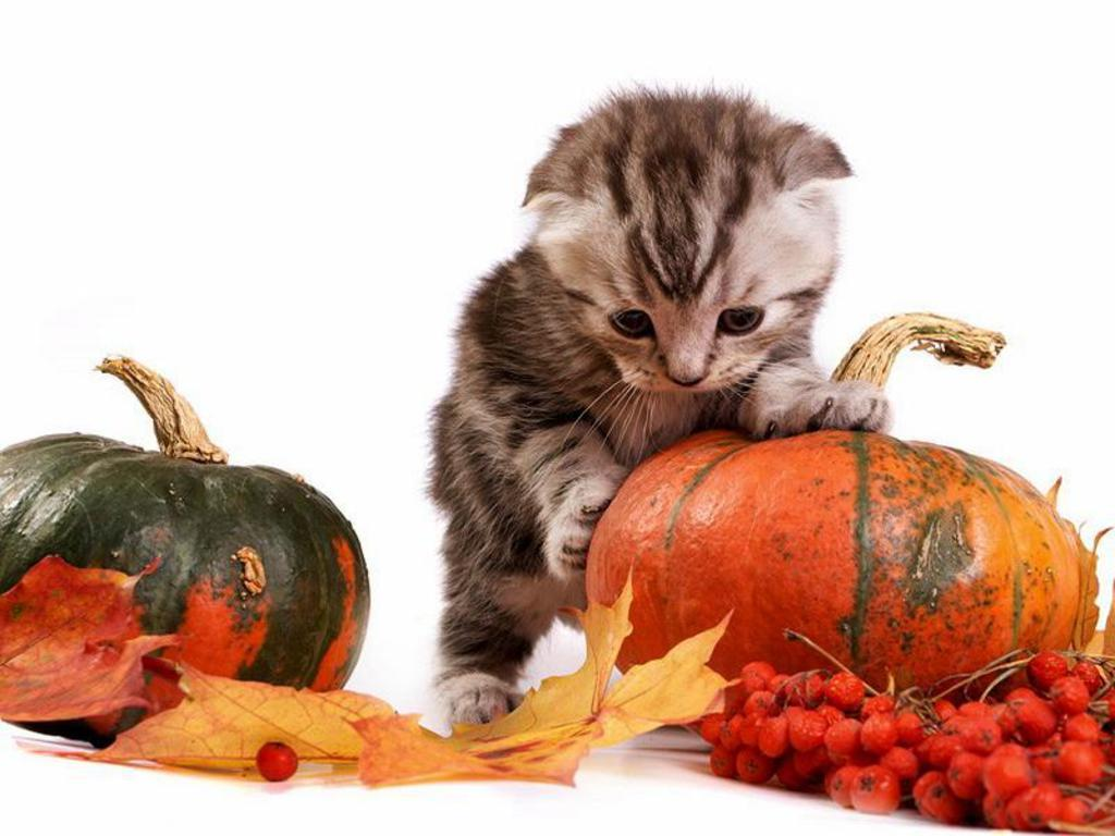 Free Halloween Cat Wallpaper Download The 1024x768PX ~ Wallpaper ...