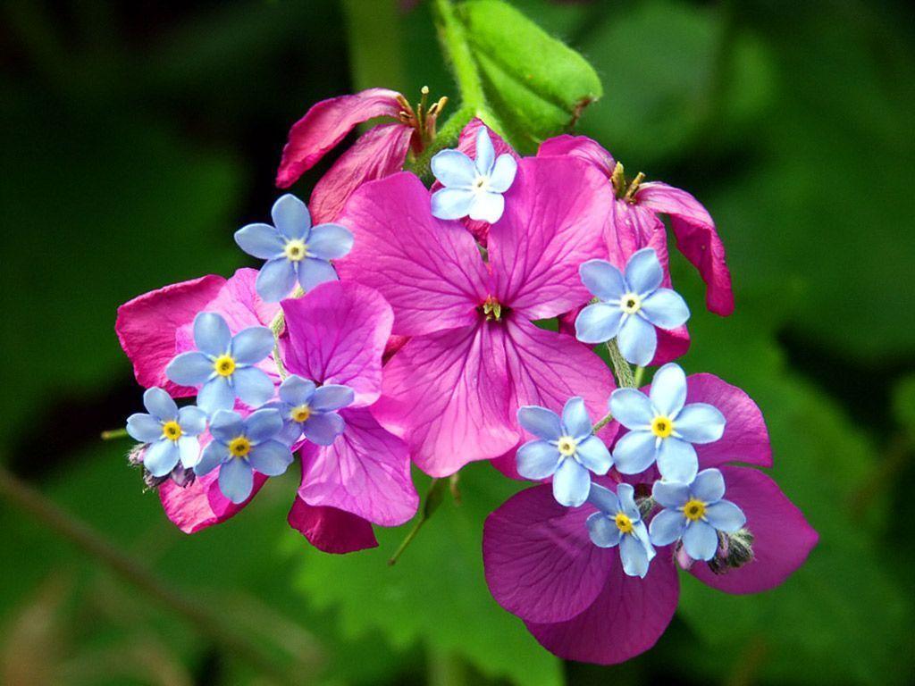 spring flowers screensavers - photo #25