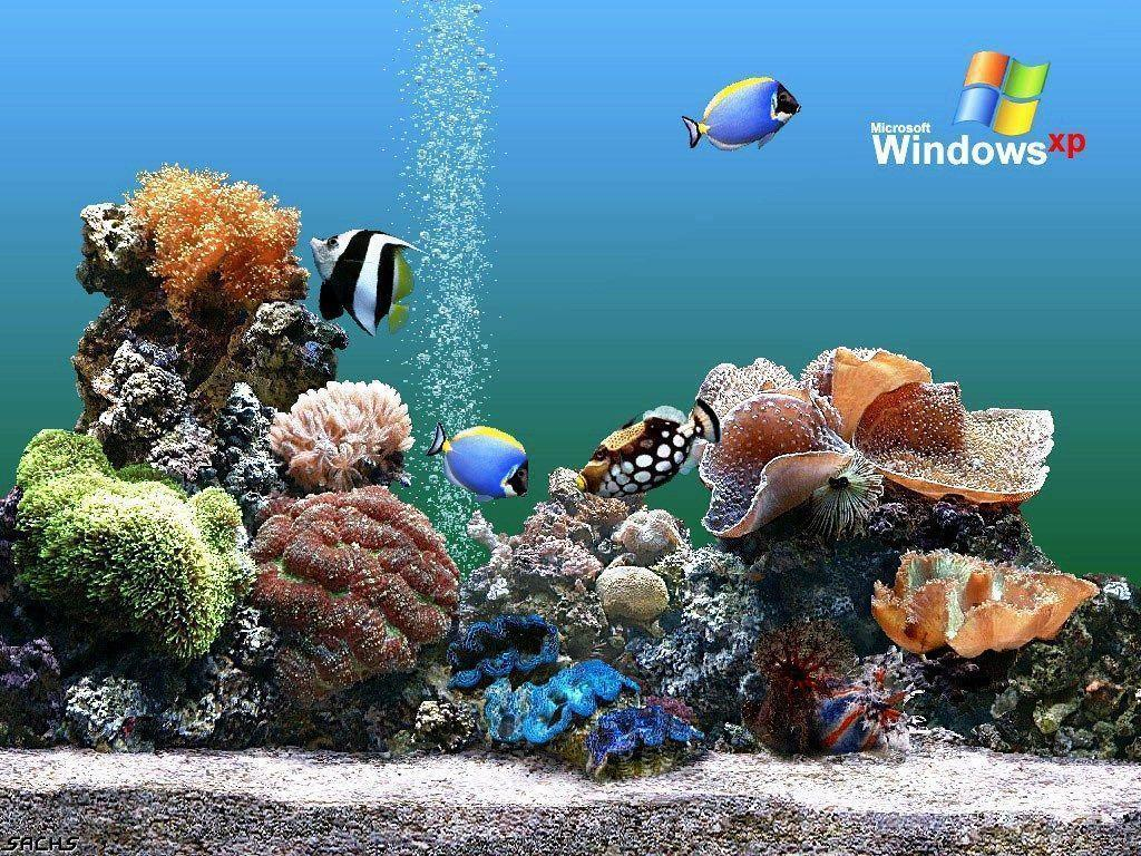 Download Free Aquarium Backgrounds Windows Aquarium Wallpaper ...