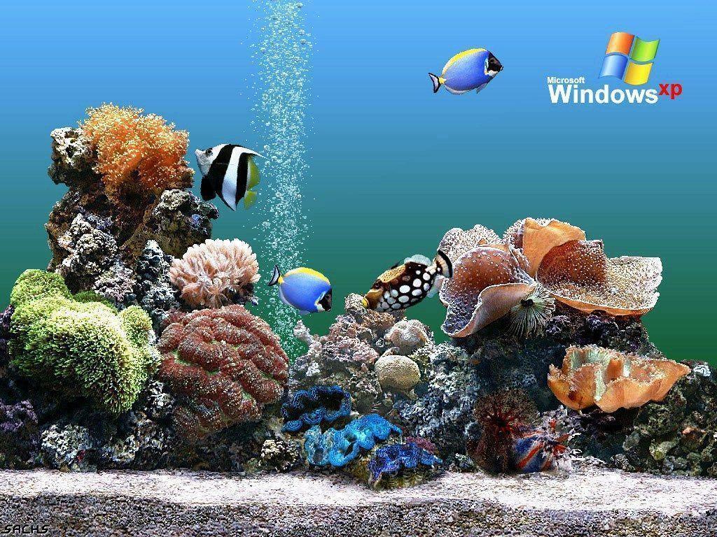 Download Free Aquarium Backgrounds Windows Aquarium Wallpaper ...