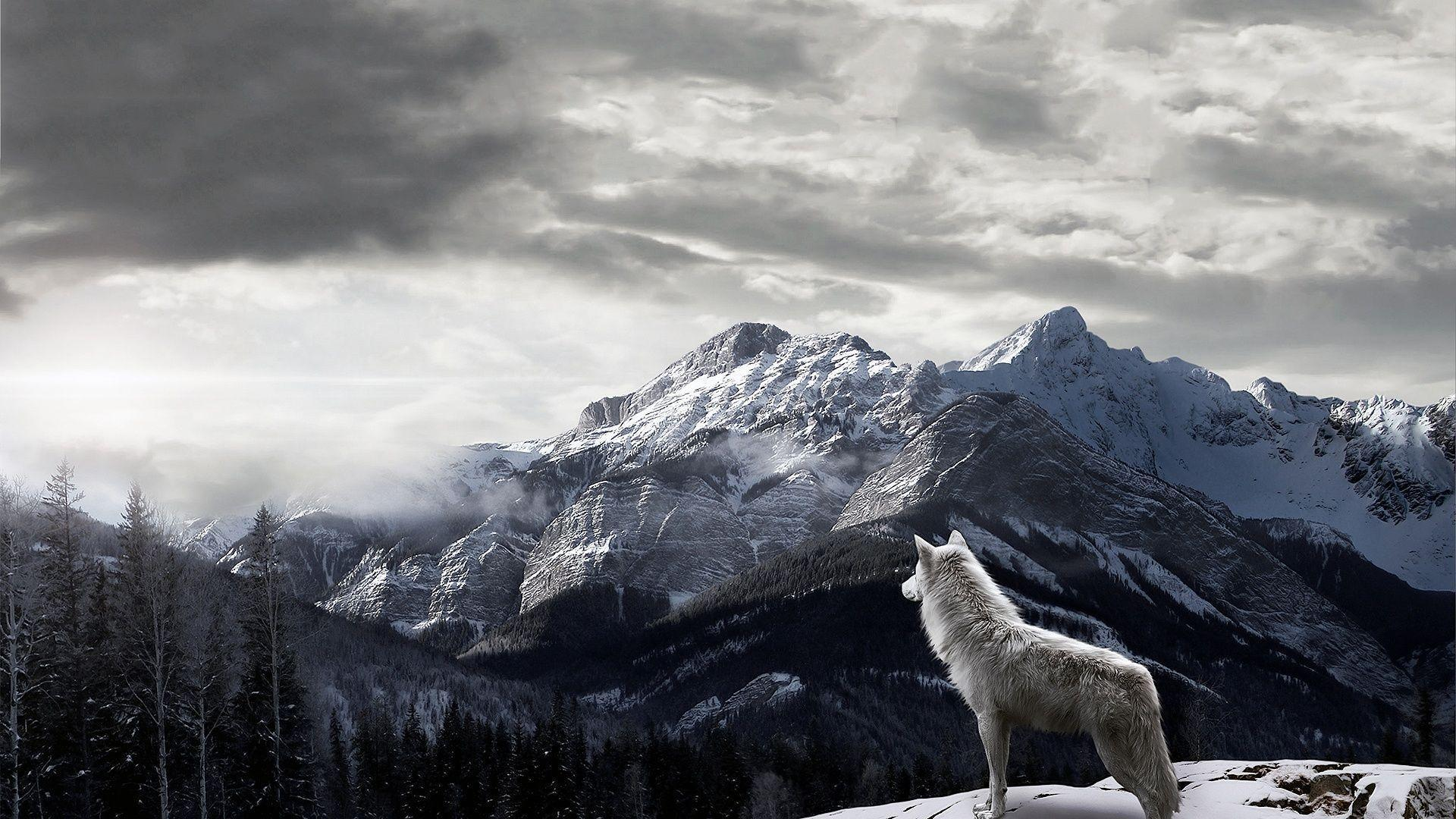 Animals For > Grey Wolf Wallpaper 1920x1080