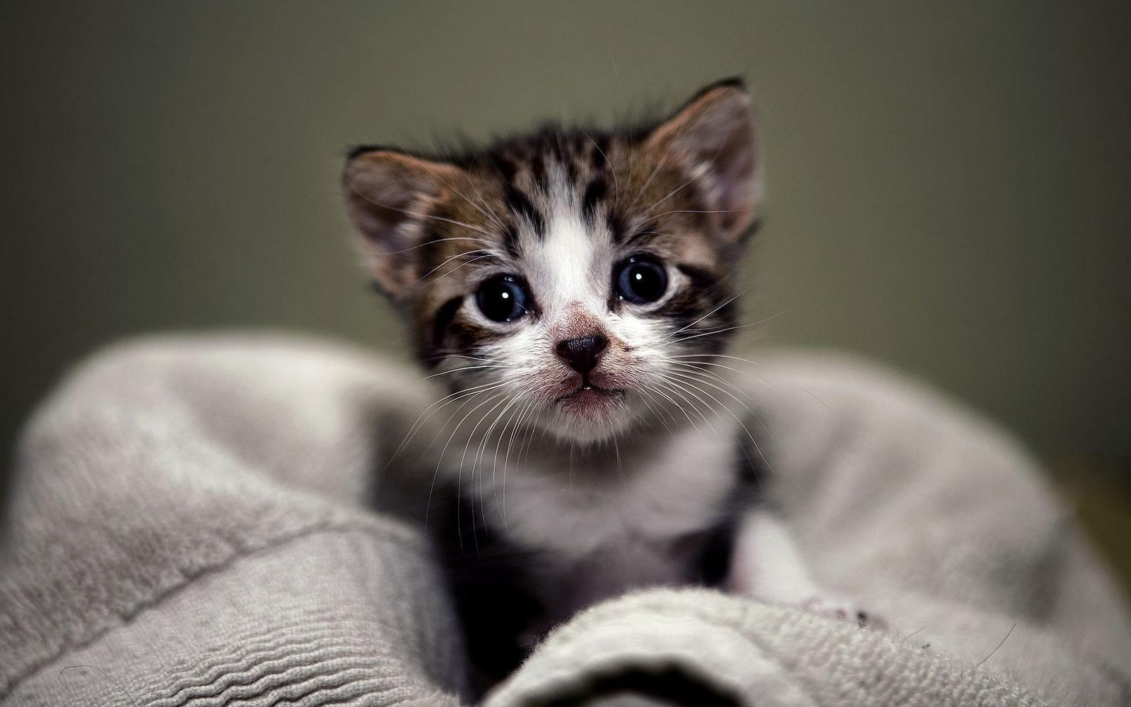 Cute Kittens Wallpapers Hd Images & Pictures - Becuo