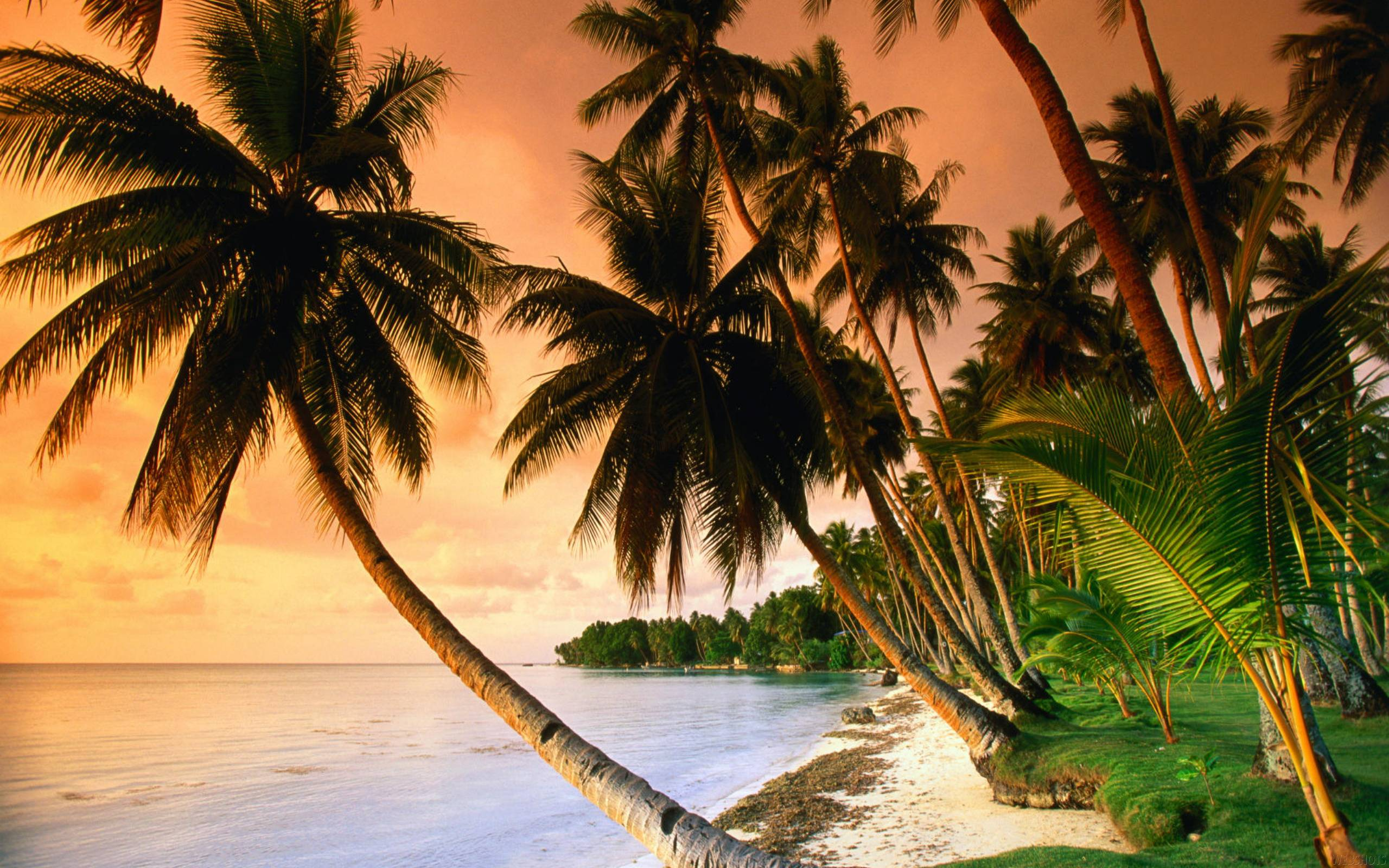 Tropical Island Beach Ambience Sound: Exotic Beach Wallpapers