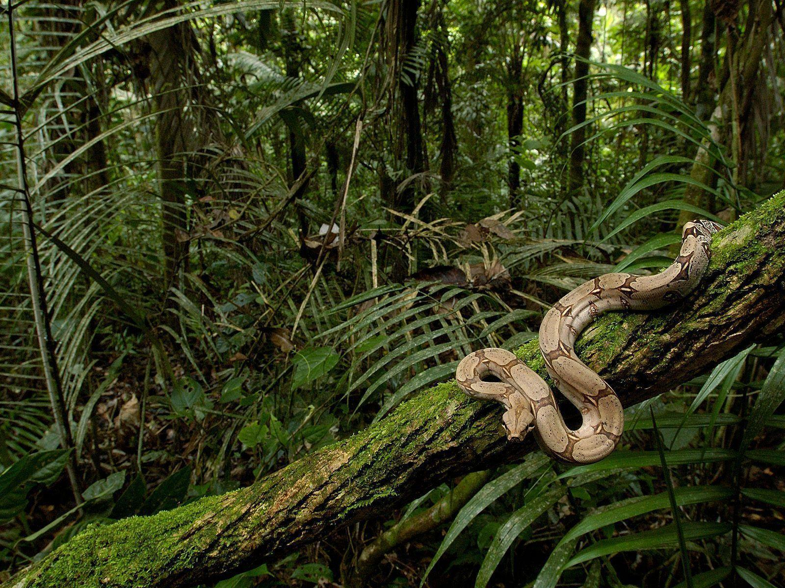 rainforest animal wallpaper pictures - photo #10