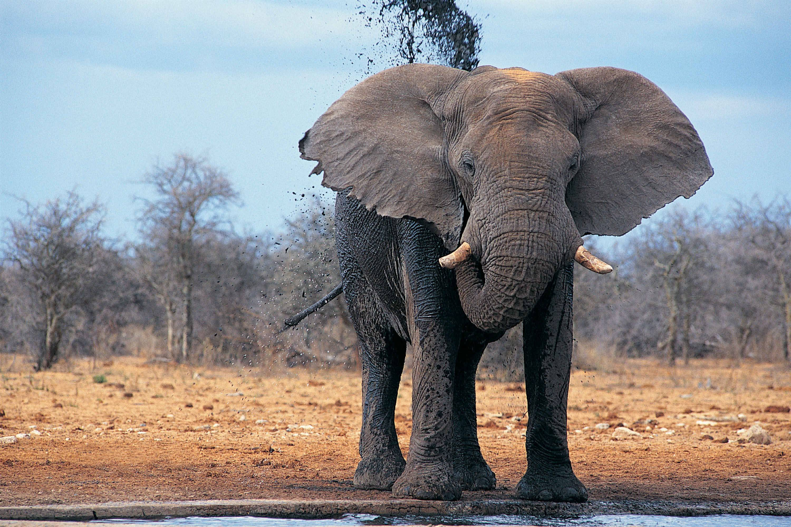 african elephant wallpapers wallpaper cave