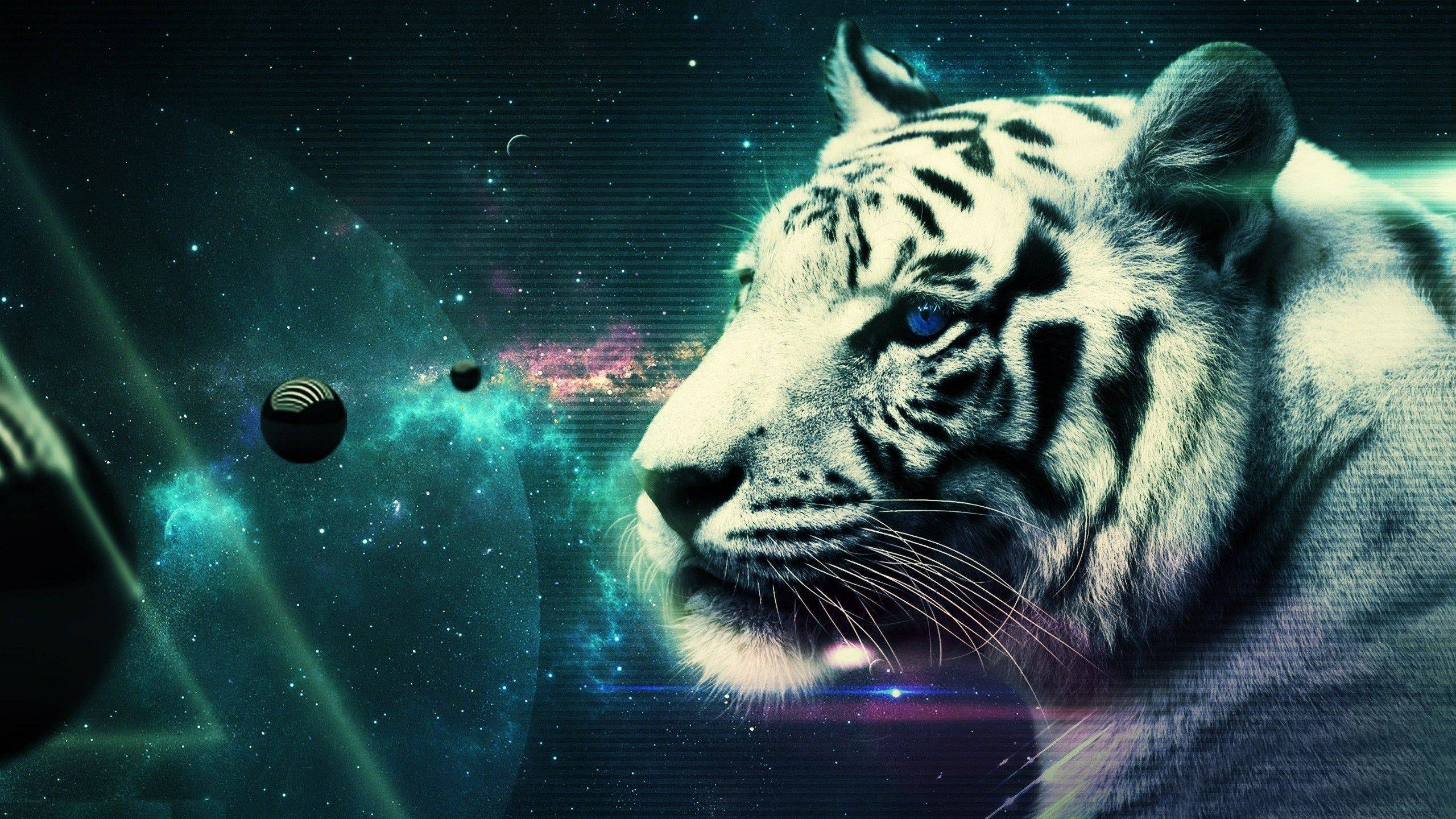 Cool White Tiger Wallpaper 25689 2560x1440 Px HDWallSource