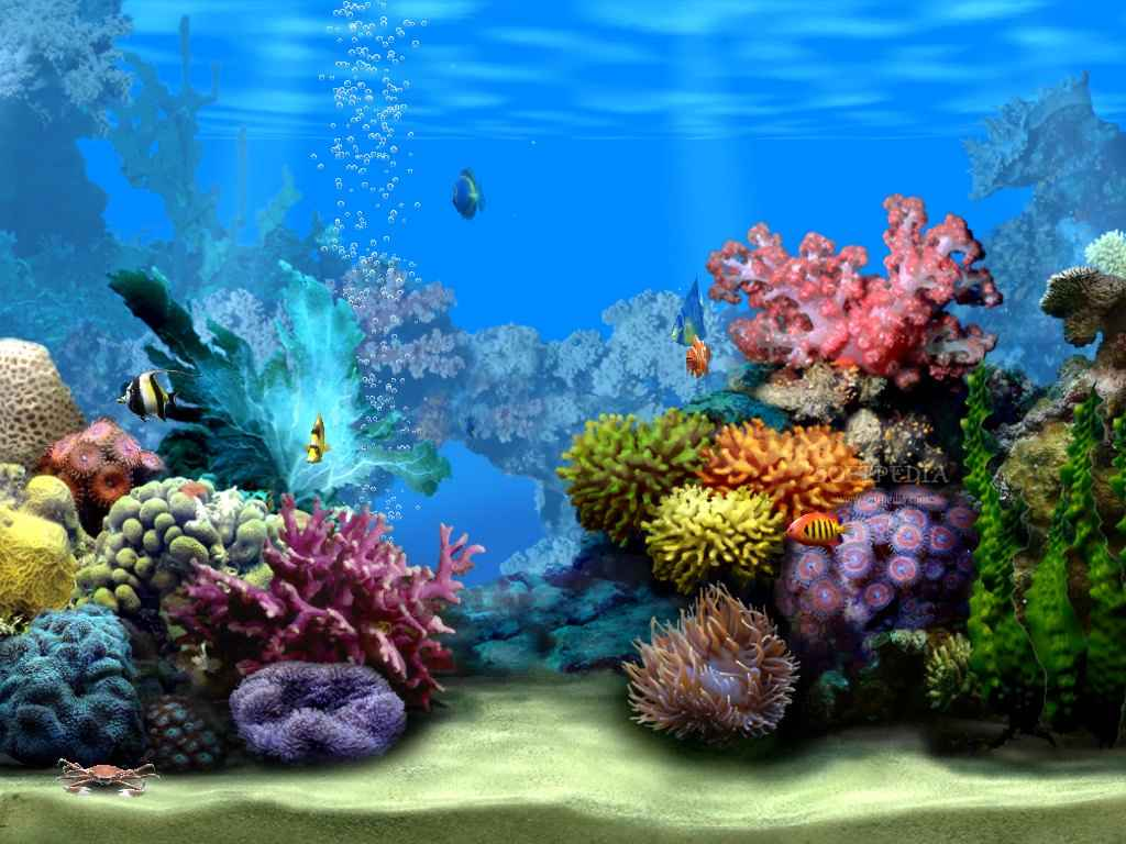 Ocean Floor Wallpapers Wallpaper Cave