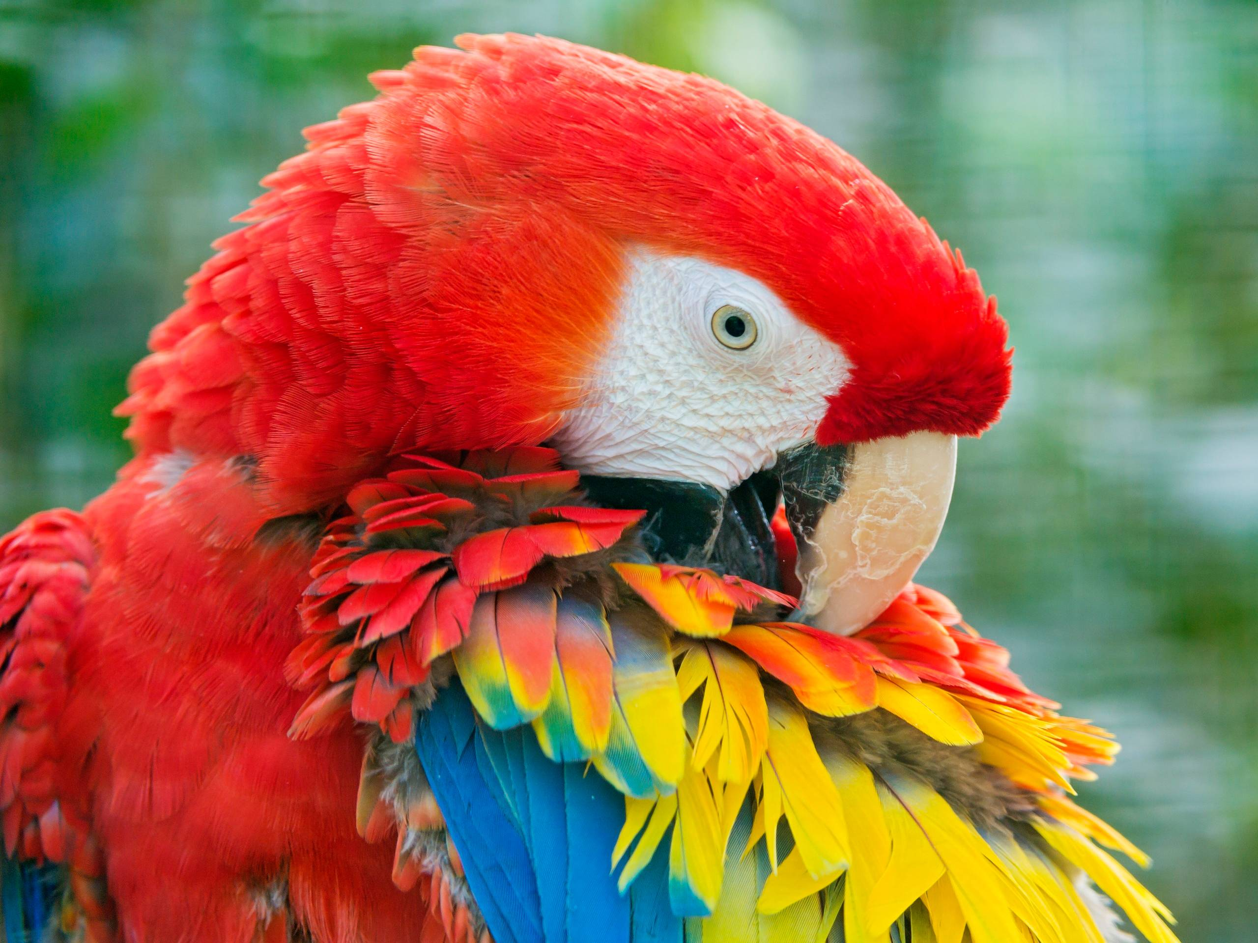 Macaw Parrot Wallpapers | Animals And Birds Wallpapers