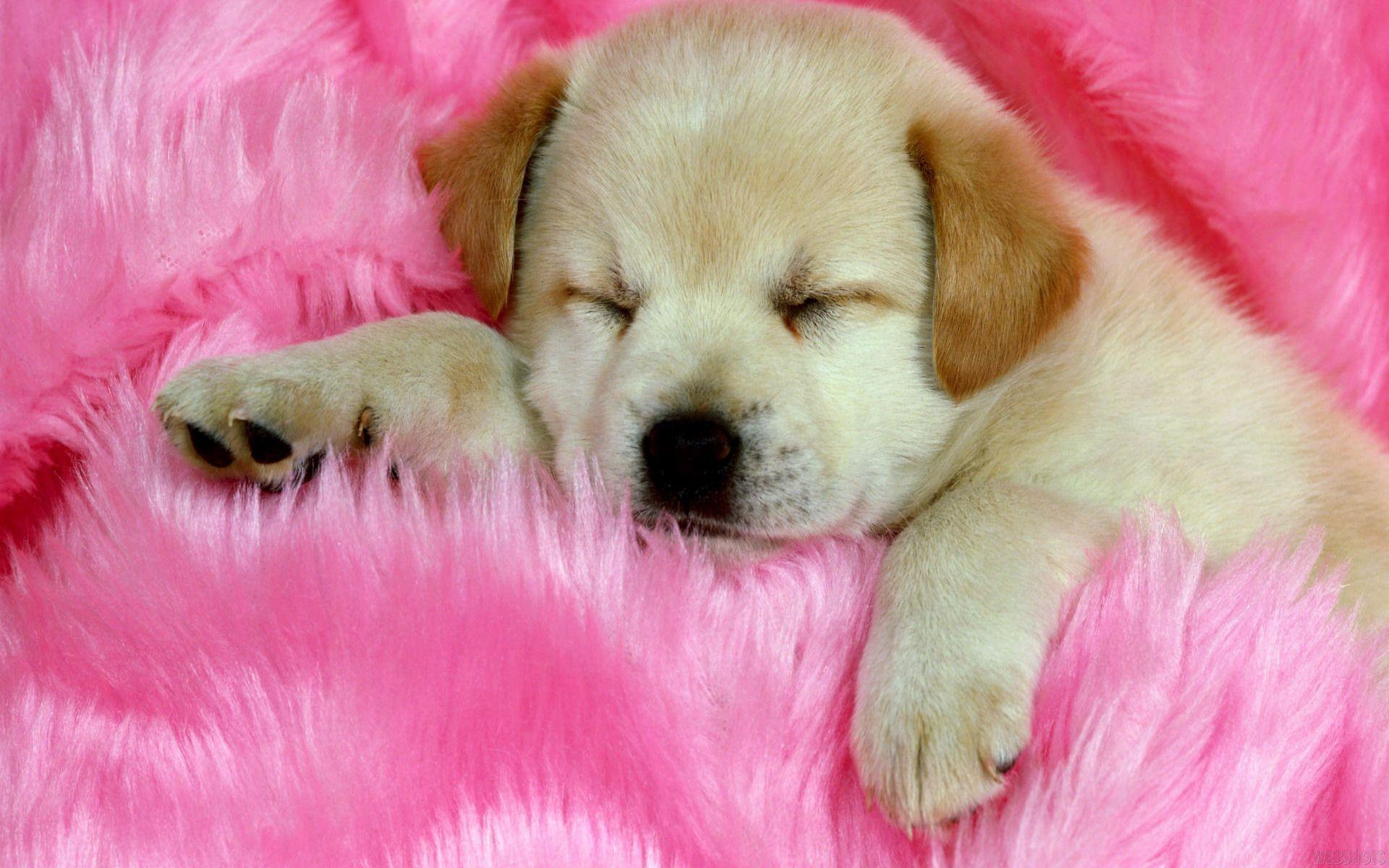Cute Dog And Cat Wallpaper Wallpapers