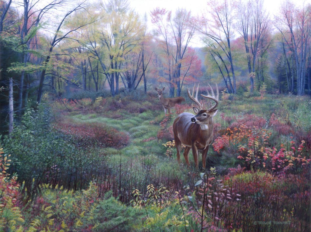 Whitetail Deer Border Wallpapers and Backgrounds