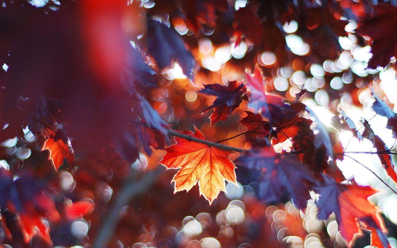 Wallpapers Autumn Wallpaper Cave