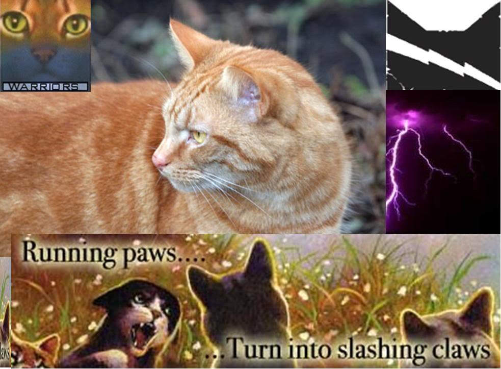 Warrior Cats Wallpapers Desktop , Wallpaper Cave