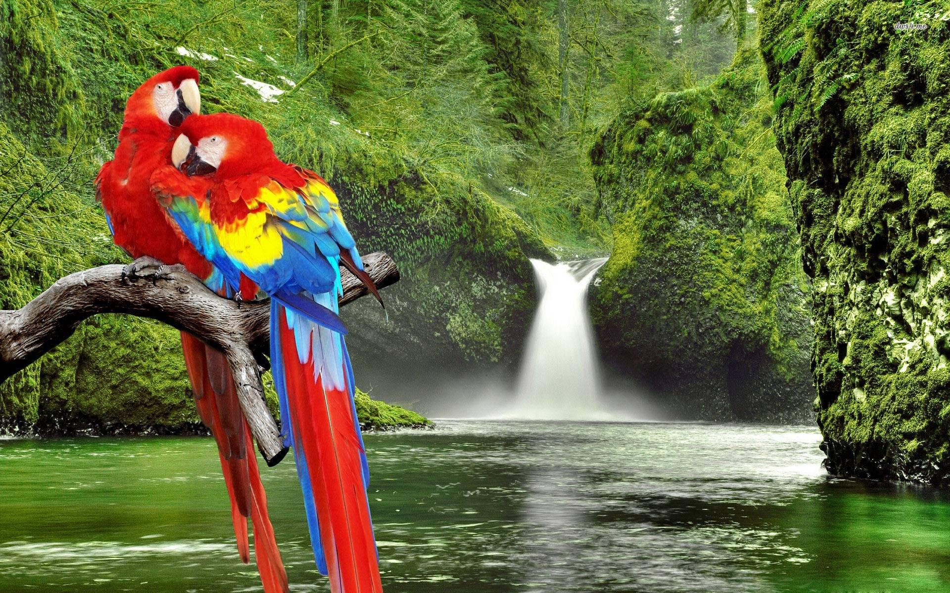 tropical bird wallpaper for walls - photo #37