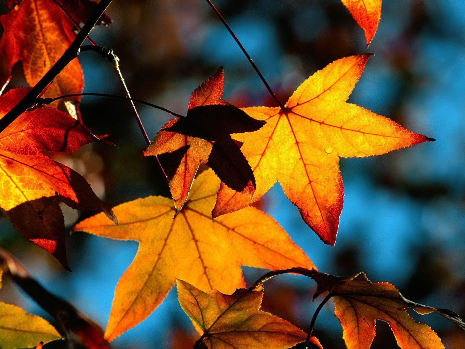 Colors of fall leaves free desktop backgrounds