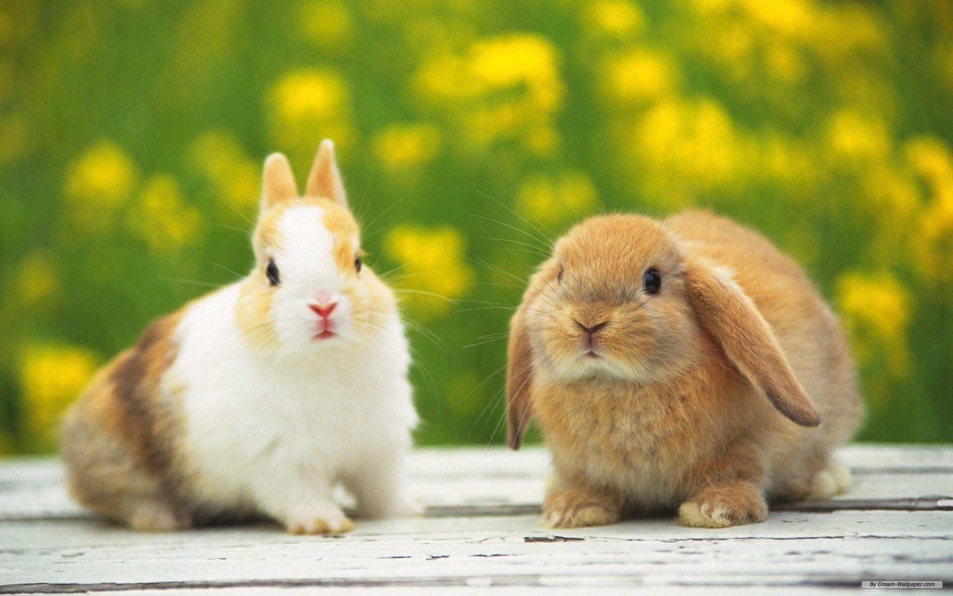 Rabbit Wallpapers - Full HD wallpaper search - page 8
