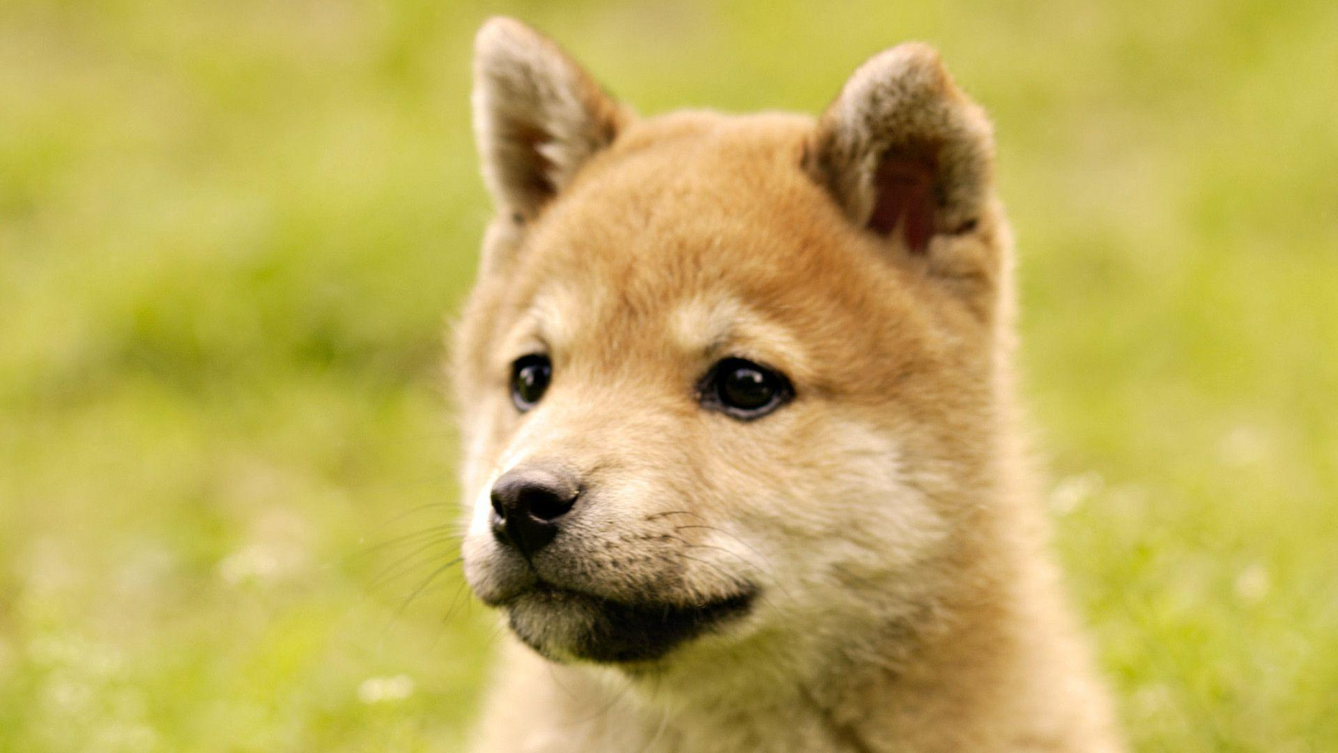 baby and shiba inu wallpaper - photo #9