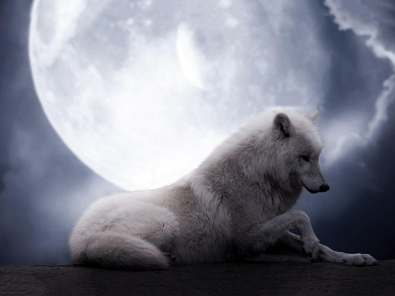 White Wolves Howling At The Moon Image & Pictures