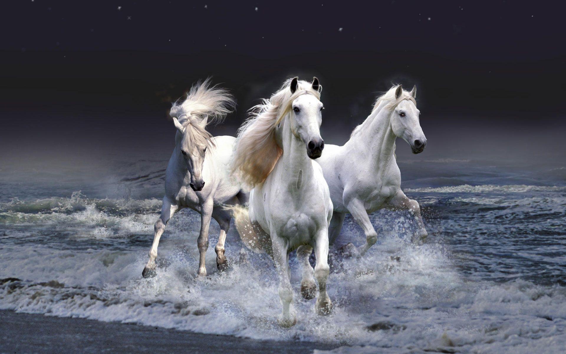 Rising Brown And Black Horse desktop wallpaper | WallpaperPixel