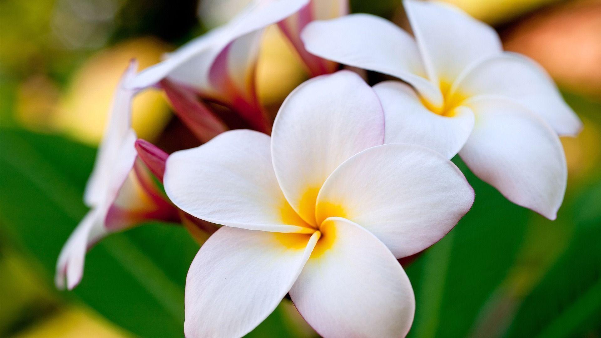 Цветы таиланда фото и названия