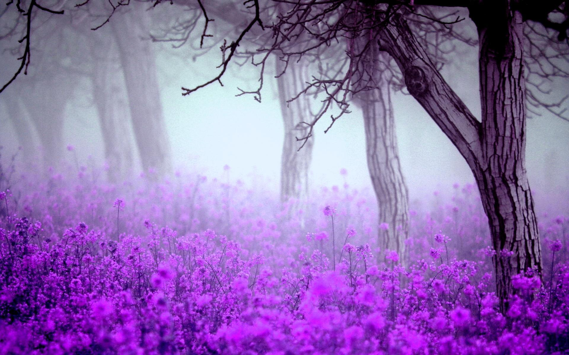 Purple flowers wallpapers wallpaper cave - Most beautiful dark wallpapers ...