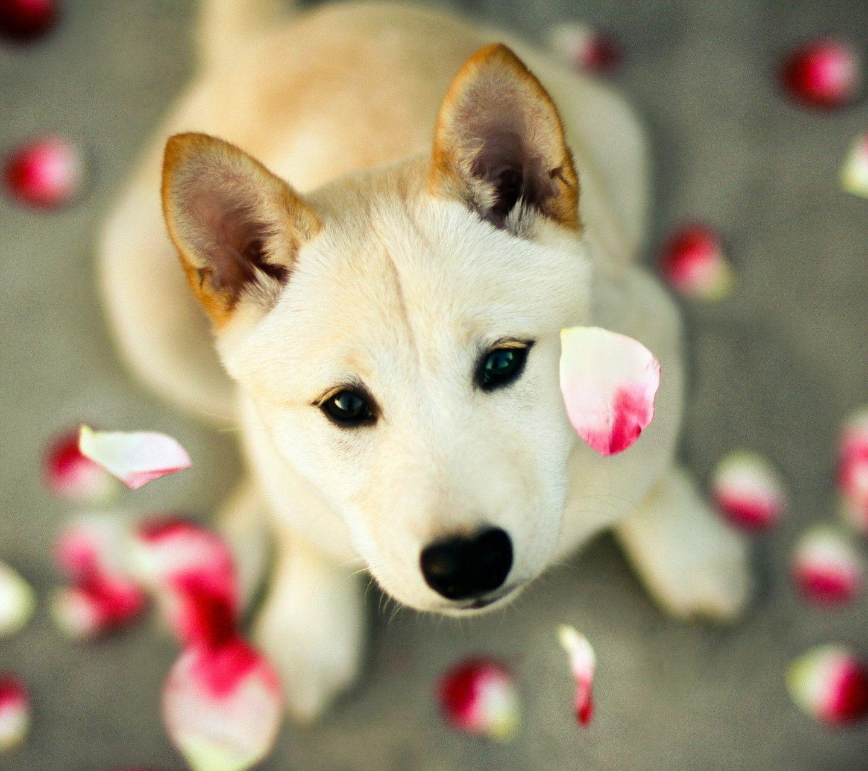 download wallpaper dog little - photo #30