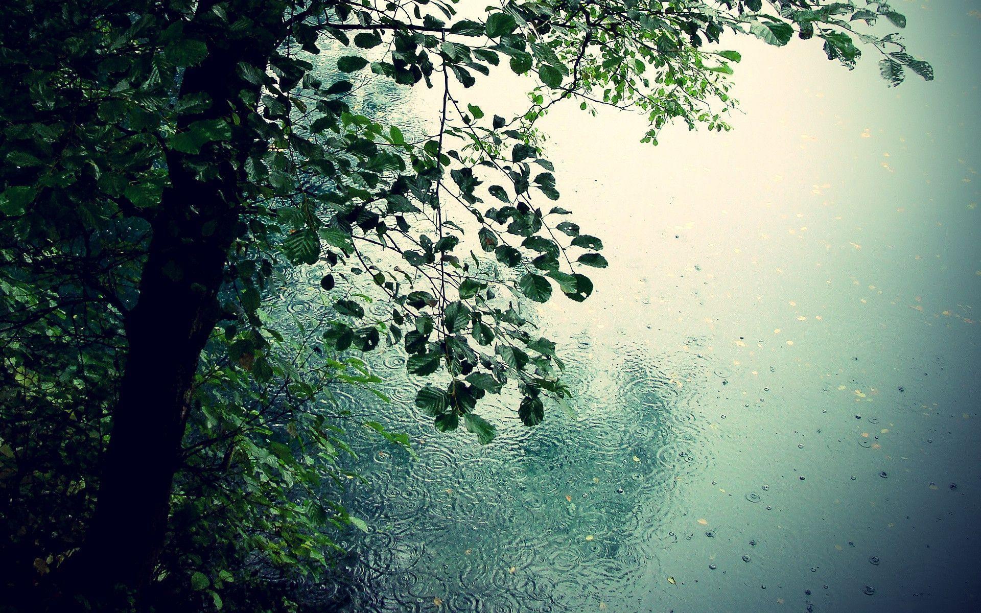 Nature Rain Wallpapers Wallpaper Cave