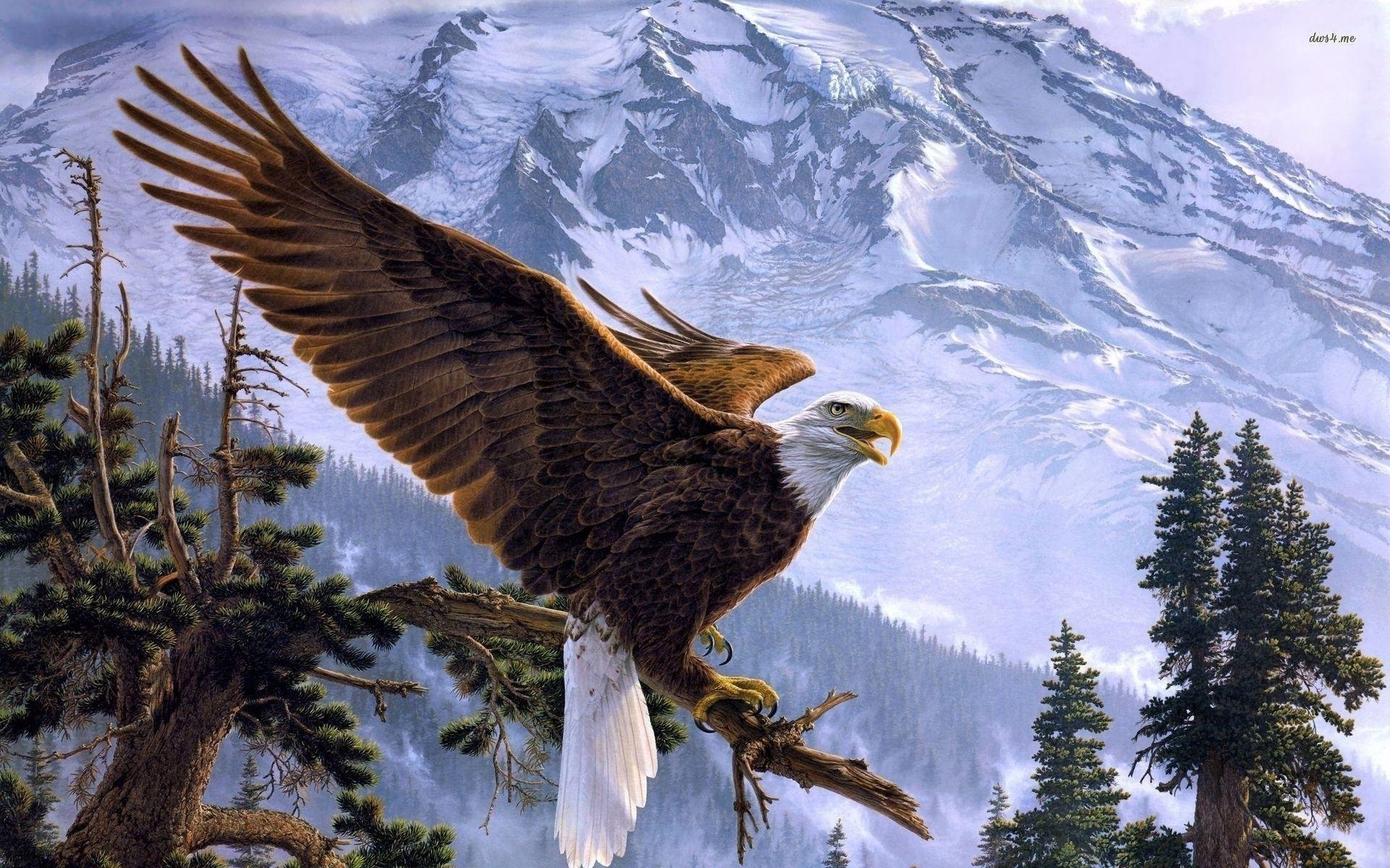 related bald eagle background - photo #29
