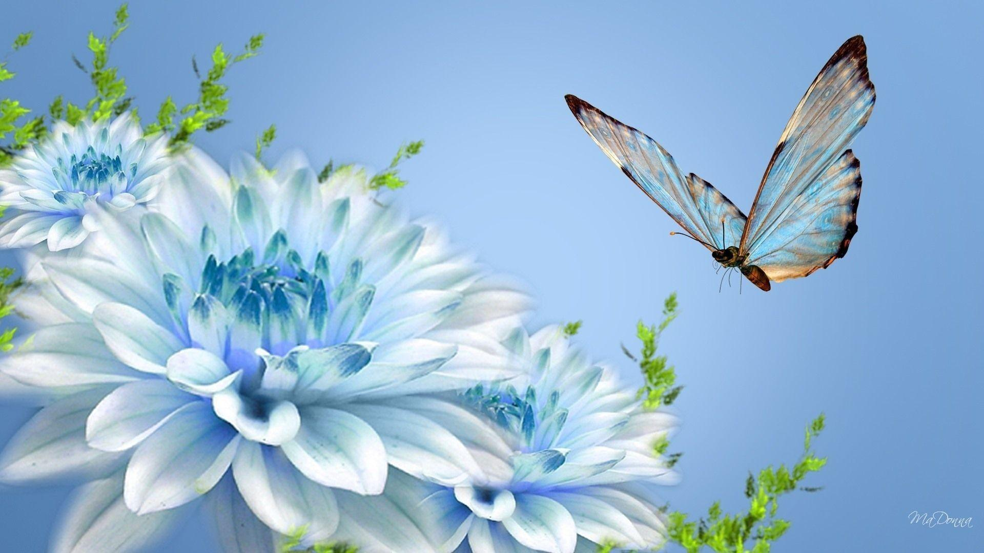 latest wallpapers of butterflies - photo #31