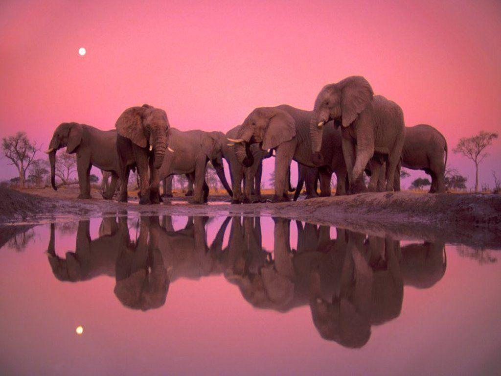 Elephant Family at Watering Hole desktop wallpapers