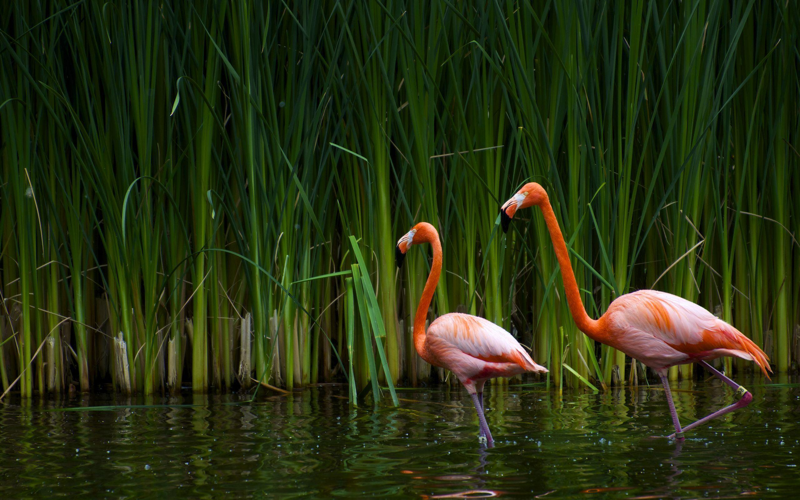 Pix For > Flamingo Wallpapers