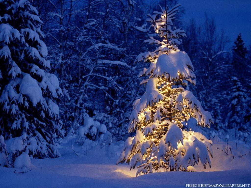 Free Golden Christmas Tree in White Snow Field wallpaper ...