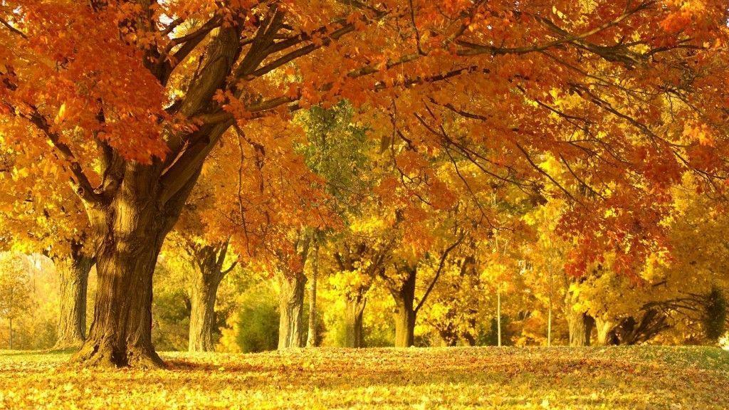 Laptop Backgrounds Free 31 Widescreen HD Backgrounds And Wallpapers
