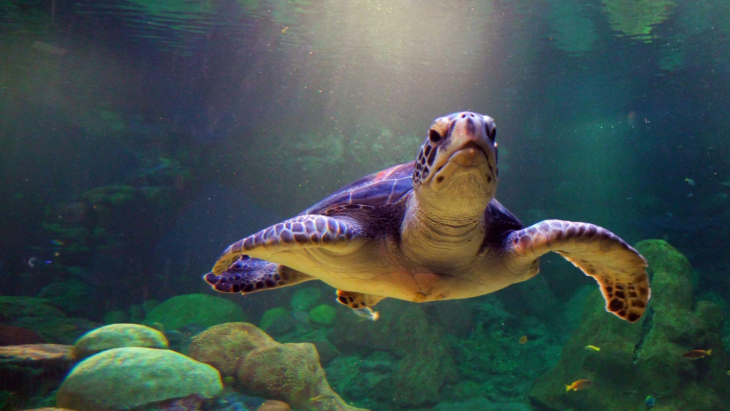 Turtle Wallpapers - Wallpaper Cave