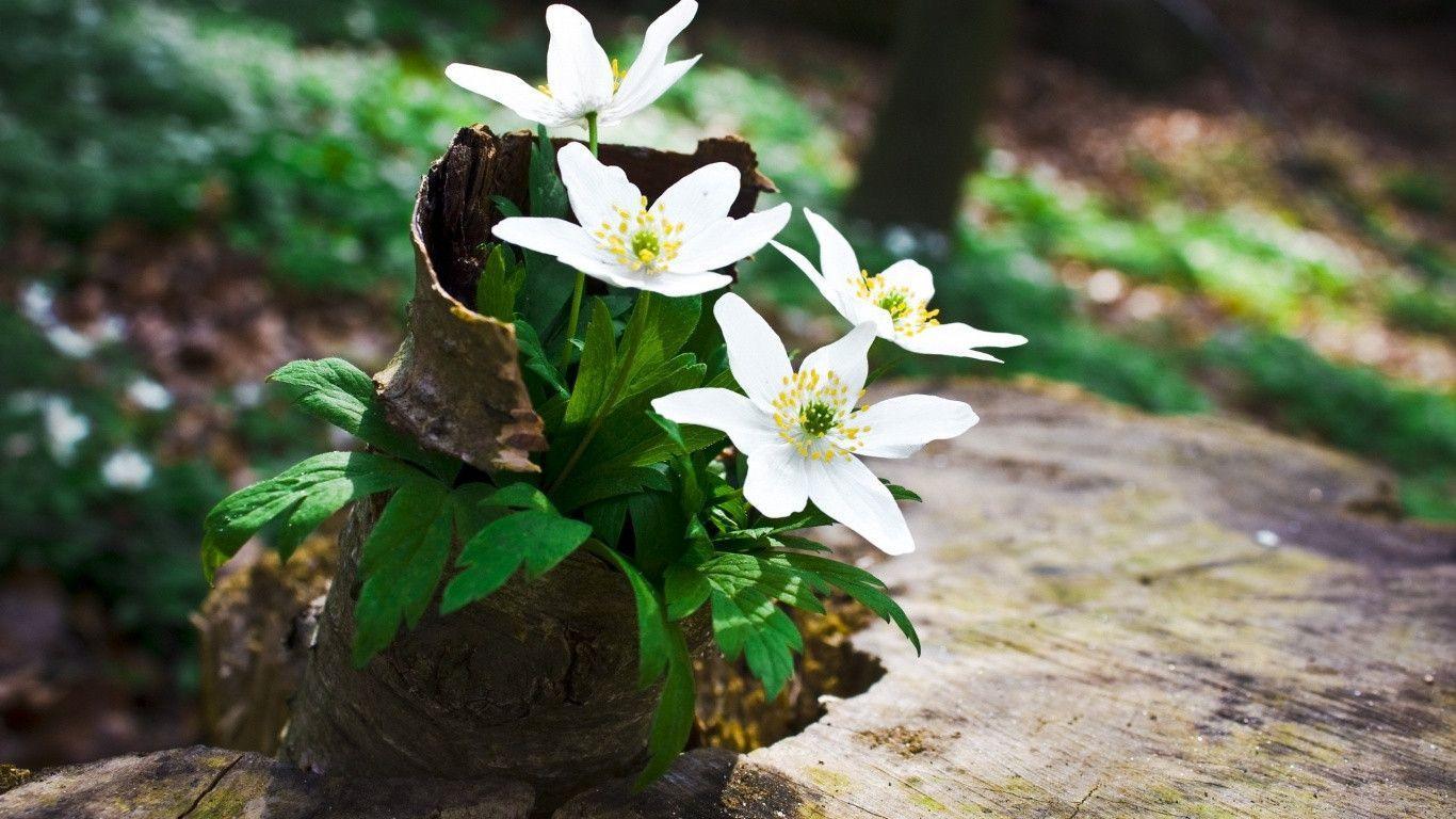 1366x768 green creative spring - photo #31