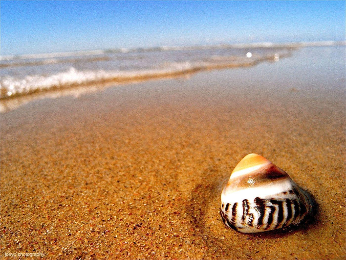 Image For > Seashell And Sand Wallpapers