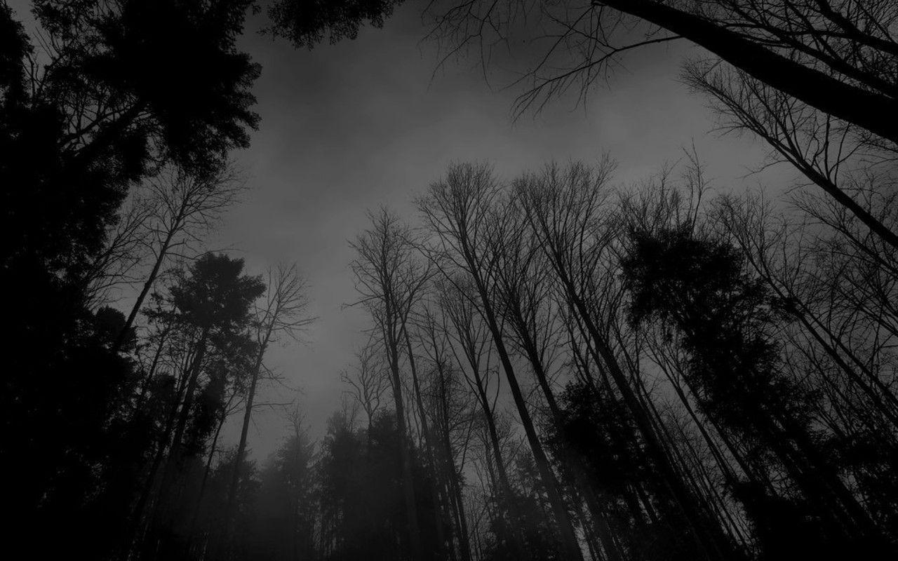 Dark Forest Backgrounds - Wallpaper Cave Dark Forest Wallpapers Widescreen