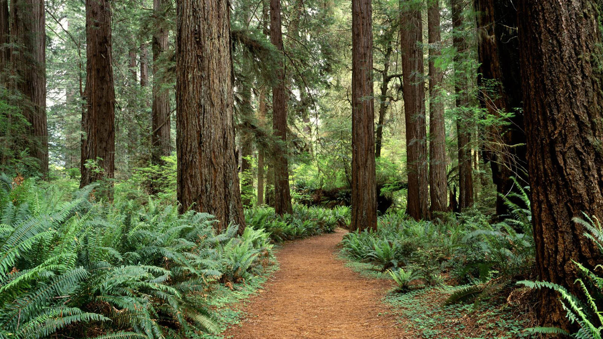 8 Amazing Places to See the Redwoods in California