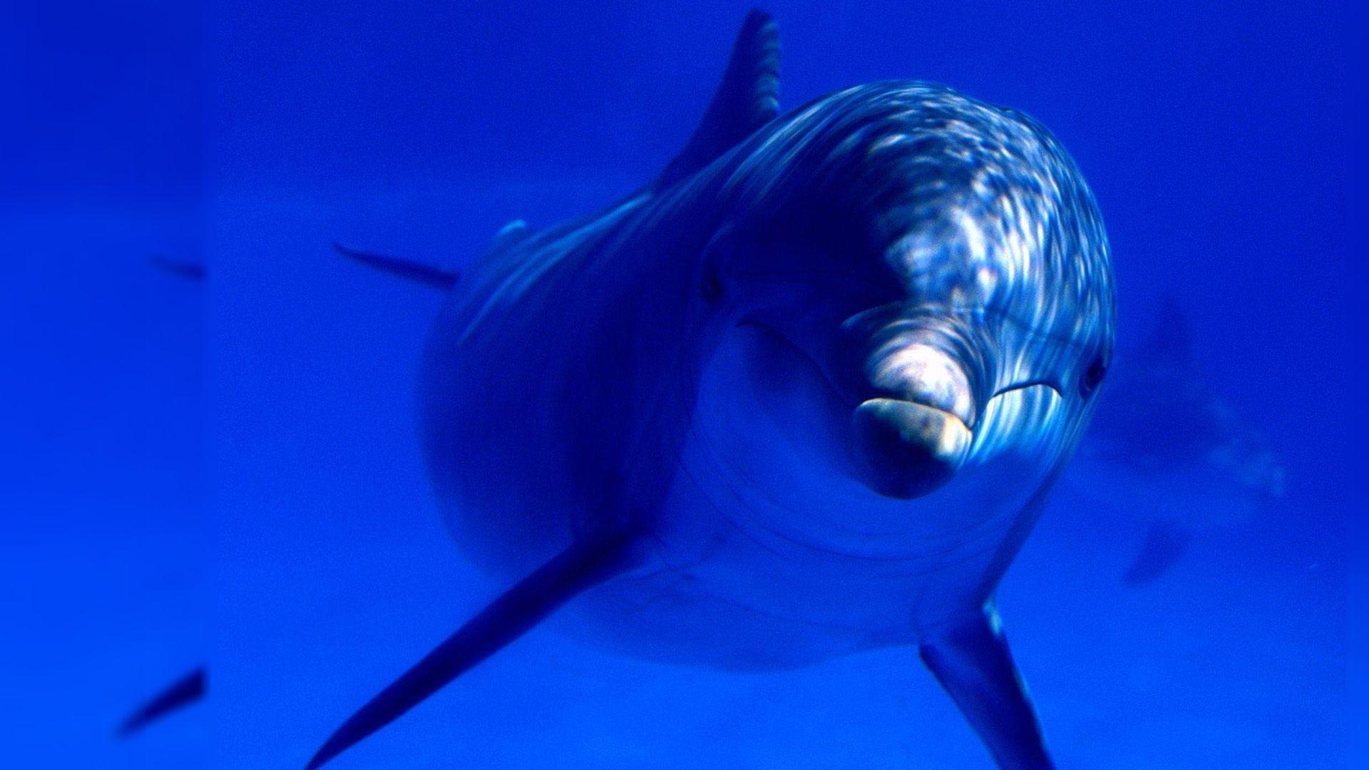 Download Dolphin Desktop Wallpaper | Full HD Wallpapers