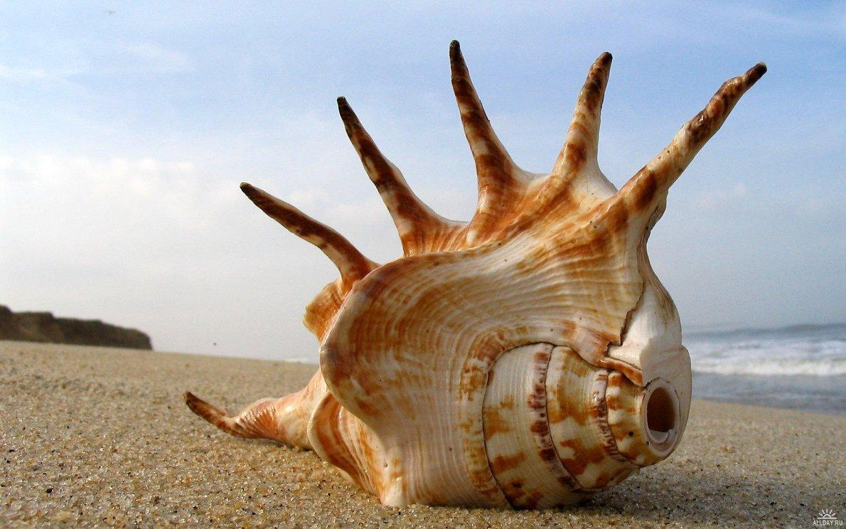 Sea shell wallpapers free desktop backgrounds