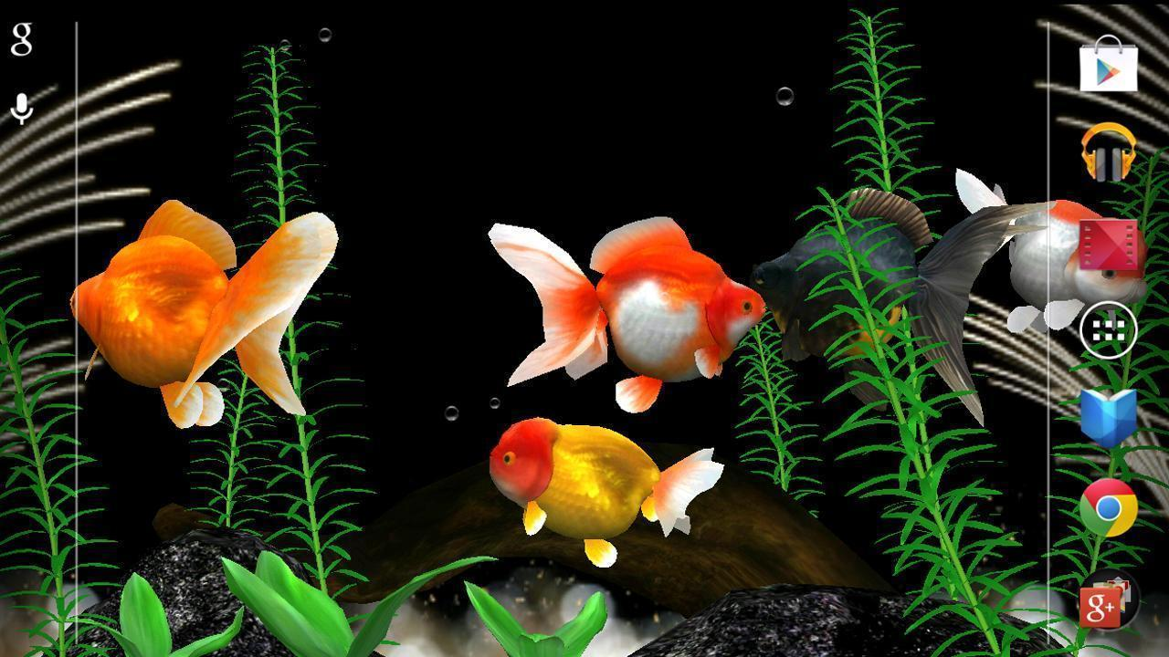 Gold fish wallpapers wallpaper cave for Fish live wallpaper