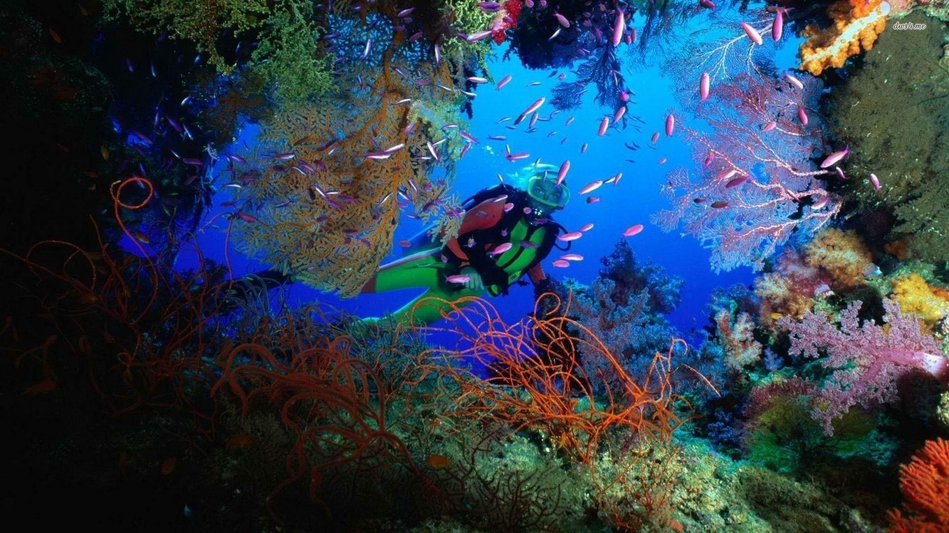 Scuba Diving Wallpapers Wallpaper Cave