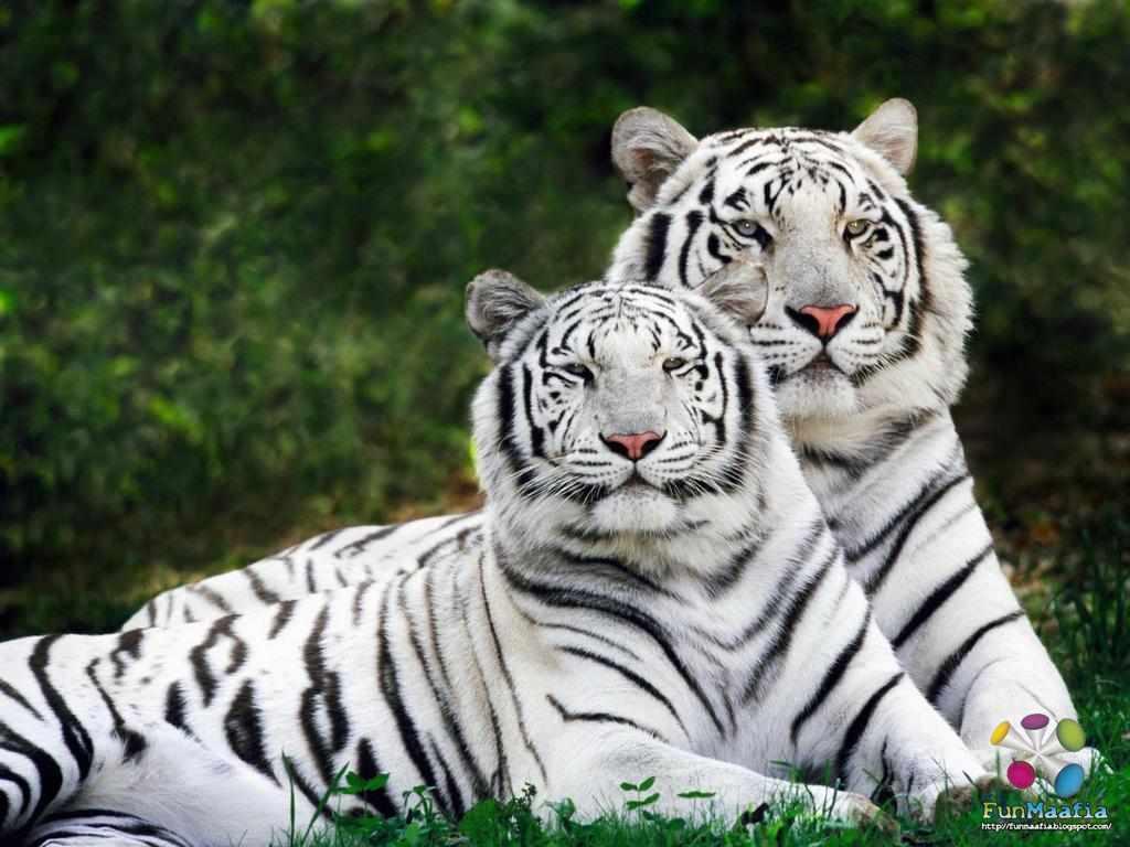 Download free wildlife wallpapers   pixelstalk. Net.