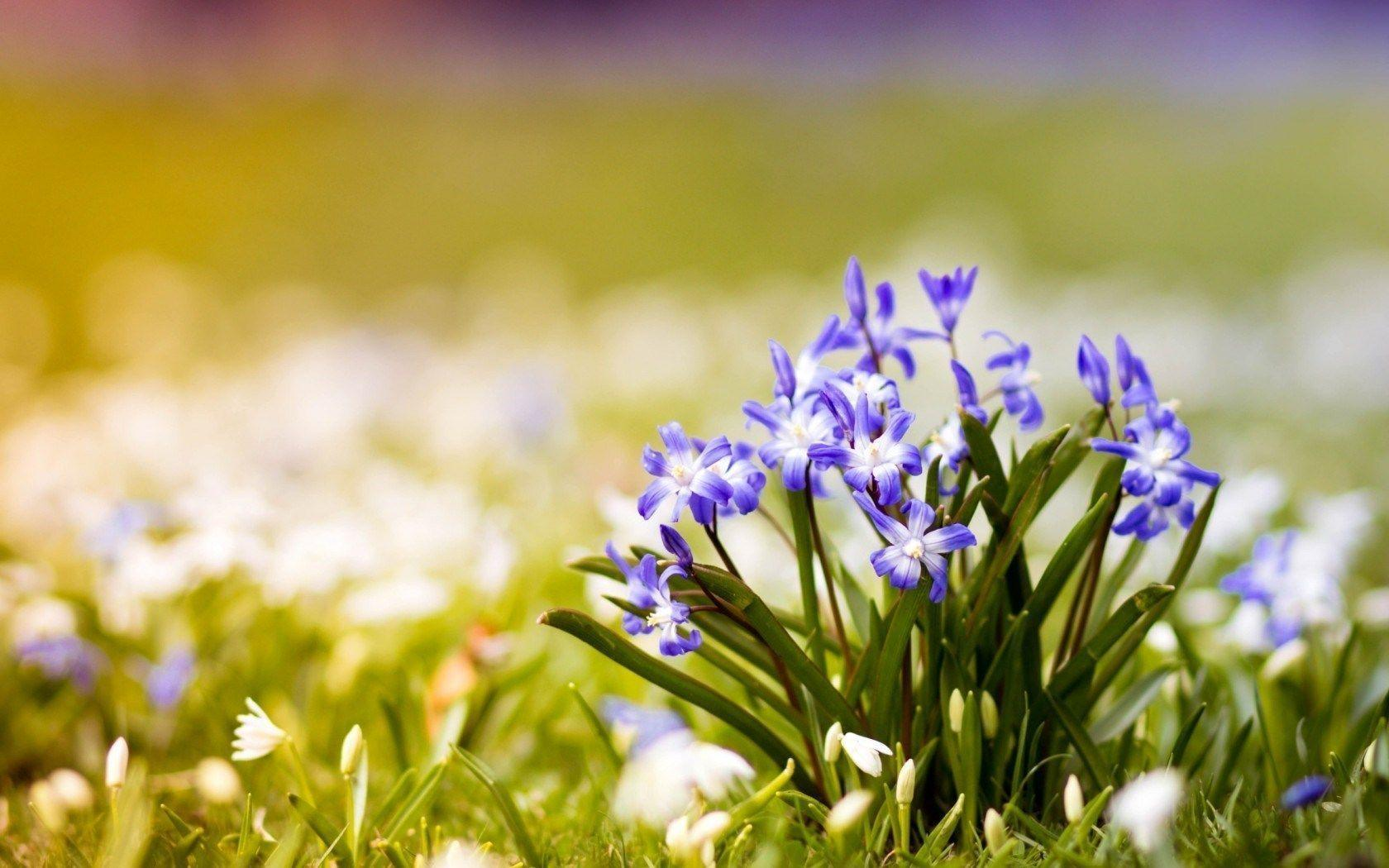 Spring Nature Wallpapers - Wallpaper Cave