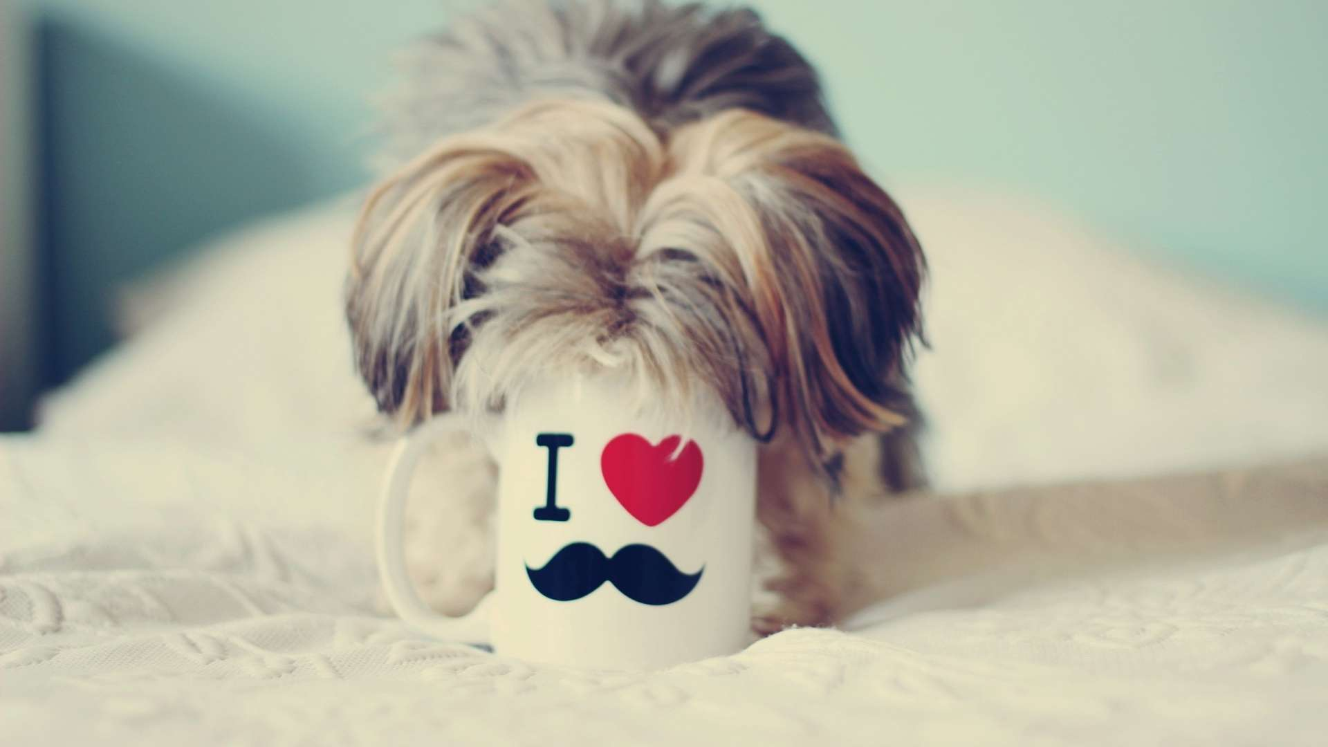 yorkshire terrier love mustache wallpaper hdwallwide