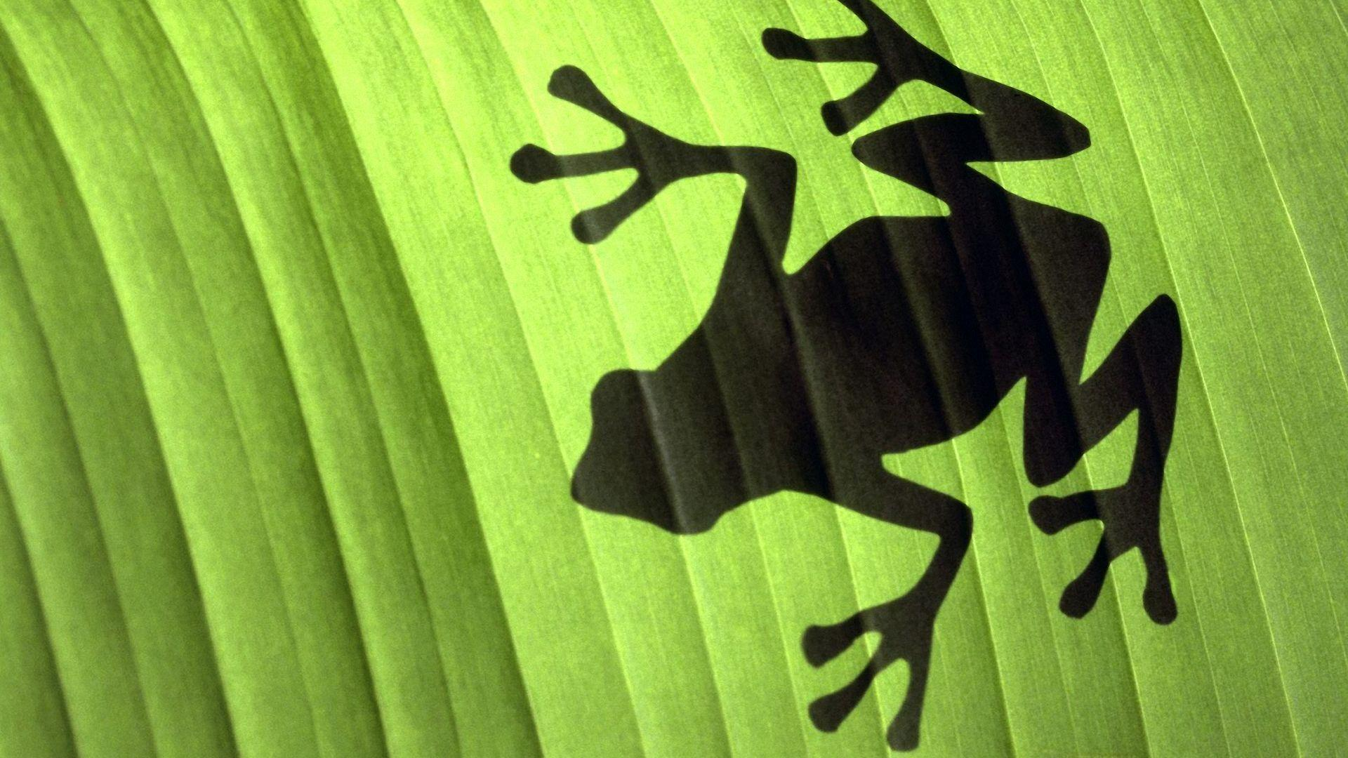 Frog Wallpapers Wallpaper