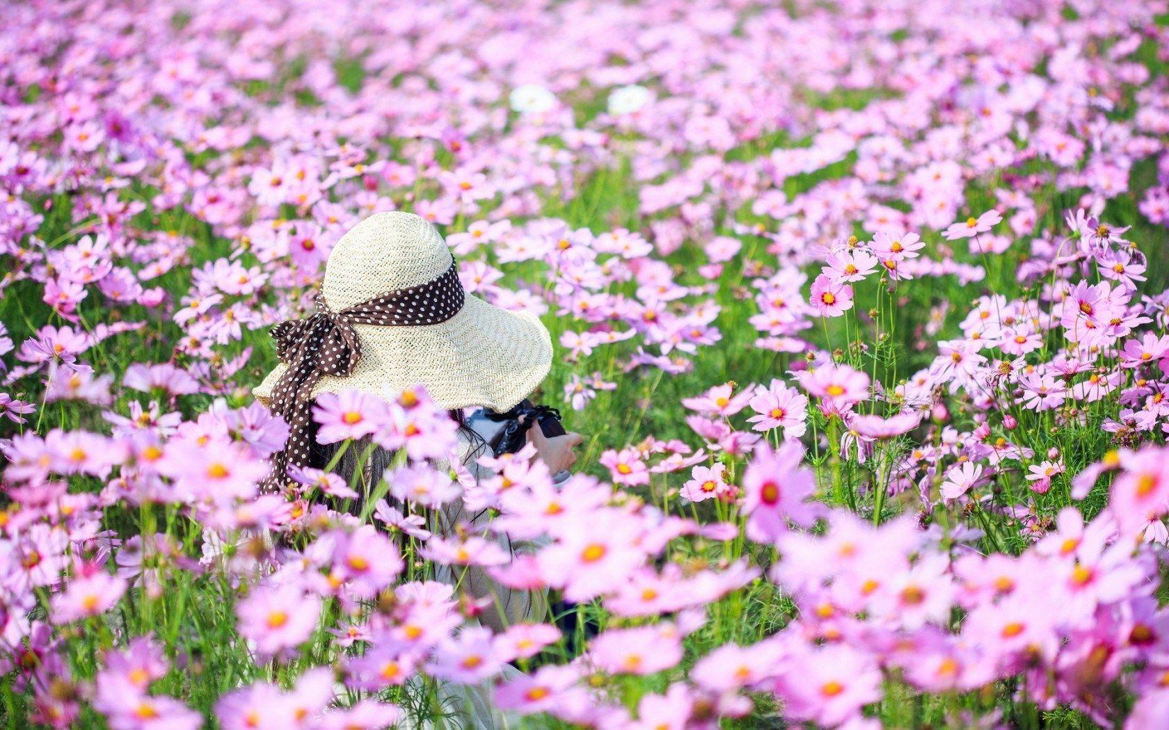 Summer Flower Field Wallpaper Summer Flower Wallpape...