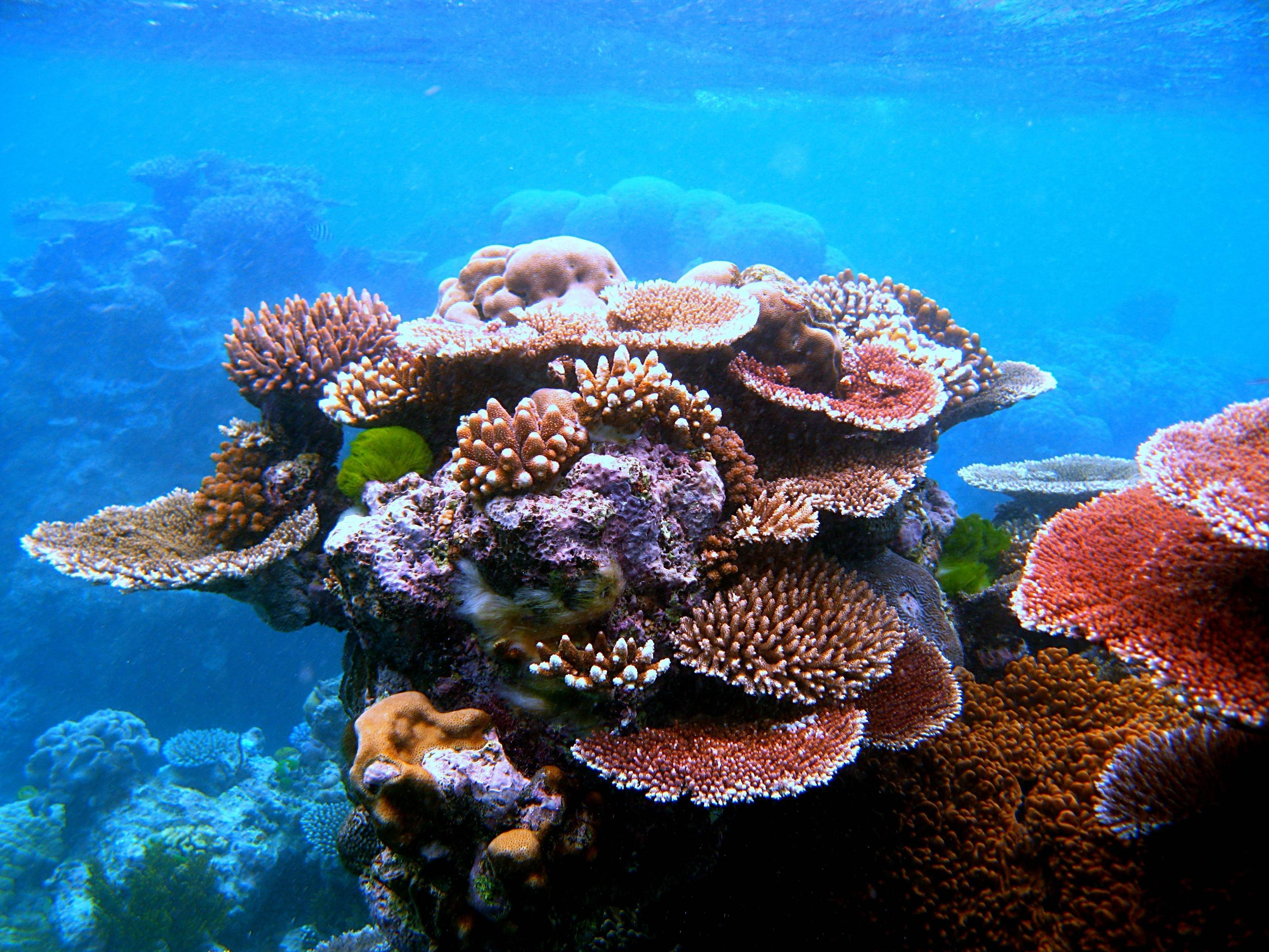 Images For > Colorful Coral Reefs Hd