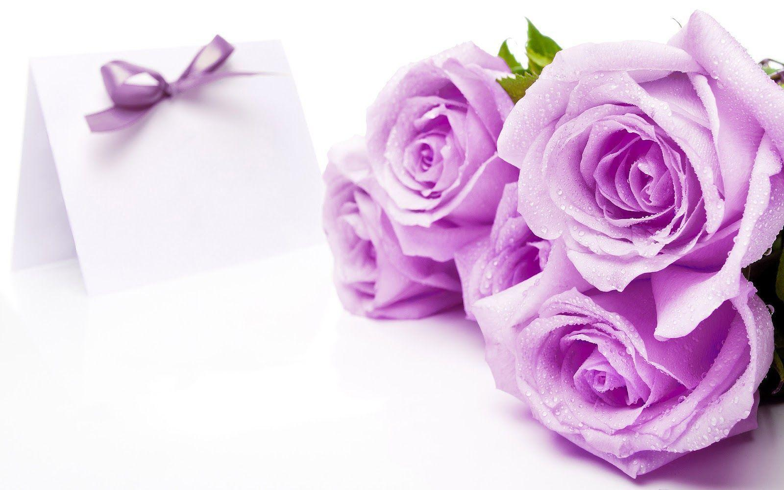 Purple roses wallpapers wallpaper cave flowers for beautiful purple roses wallpapers izmirmasajfo