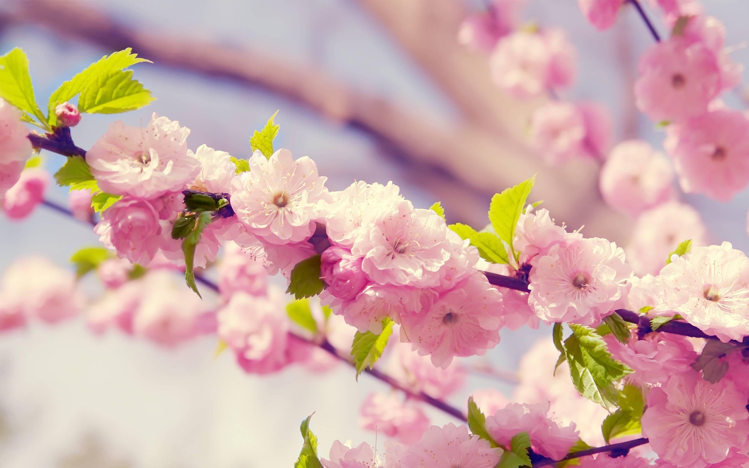 pink flower desktop backgrounds wallpaper pink flower desktop